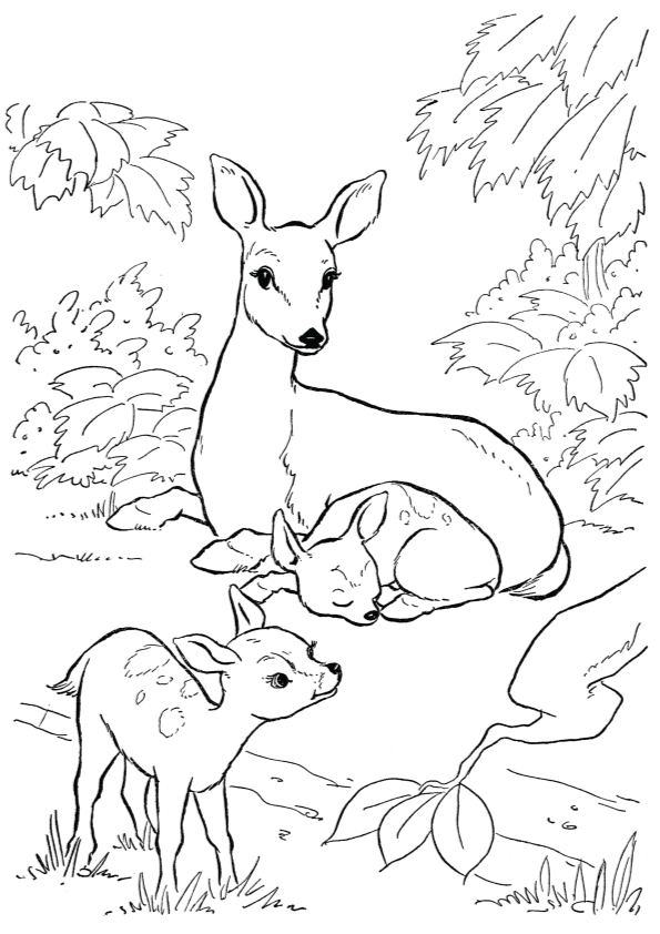 deer-coloring-page-0007-q2