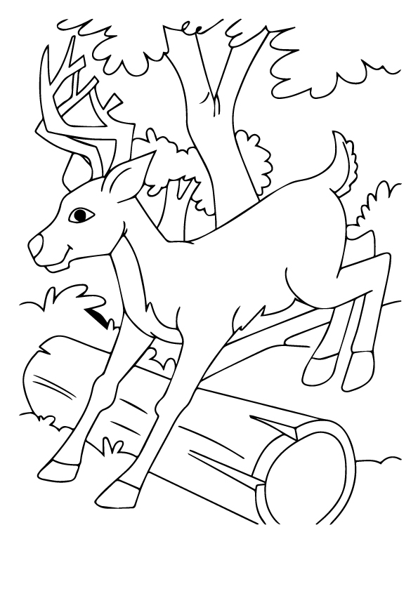 deer-coloring-page-0013-q2