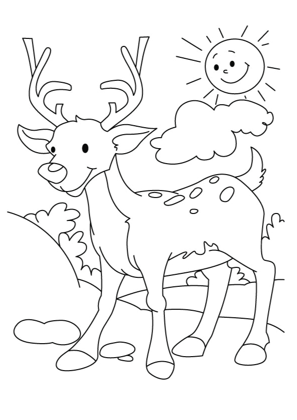 deer-coloring-page-0014-q2