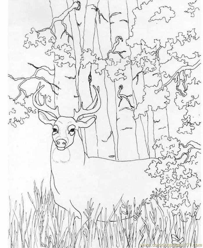 deer-coloring-page-0018-q1