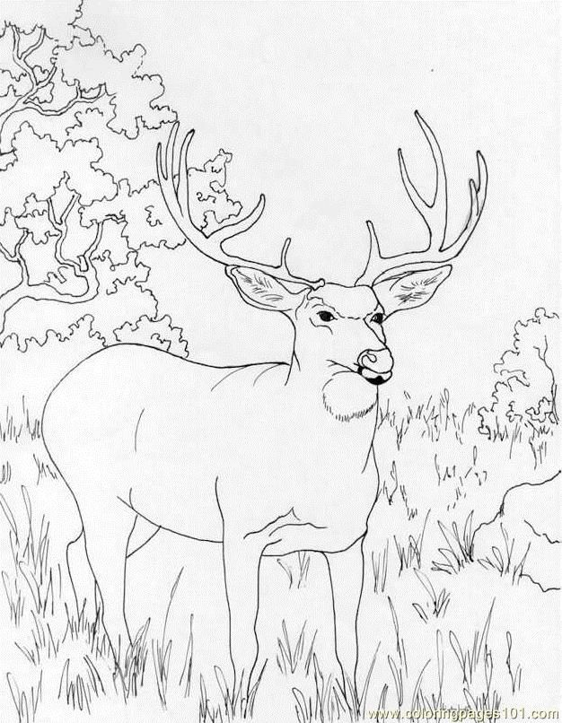 deer-coloring-page-0021-q1