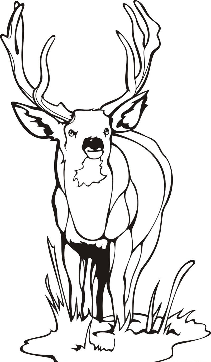 deer-coloring-page-0024-q1