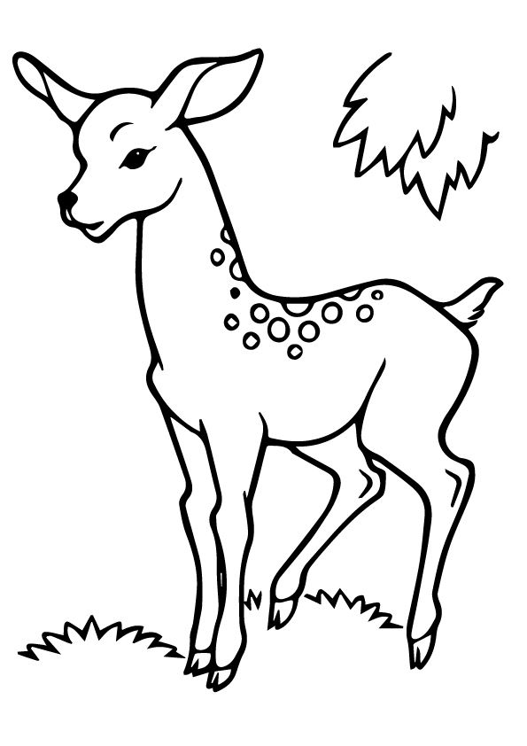 deer-coloring-page-0026-q2