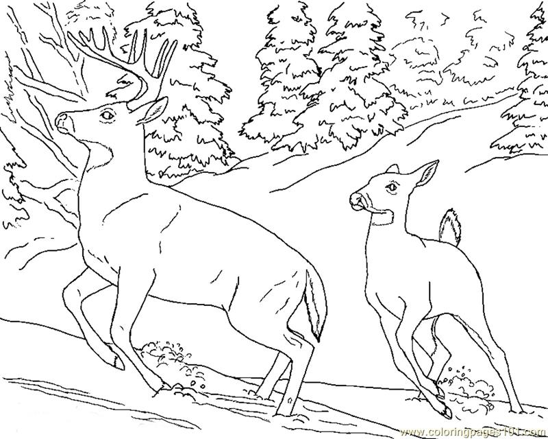 deer-coloring-page-0028-q1
