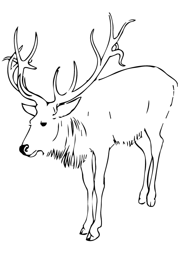 deer-coloring-page-0030-q2