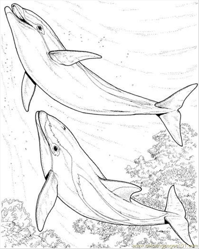 dolphin-coloring-page-0010-q1