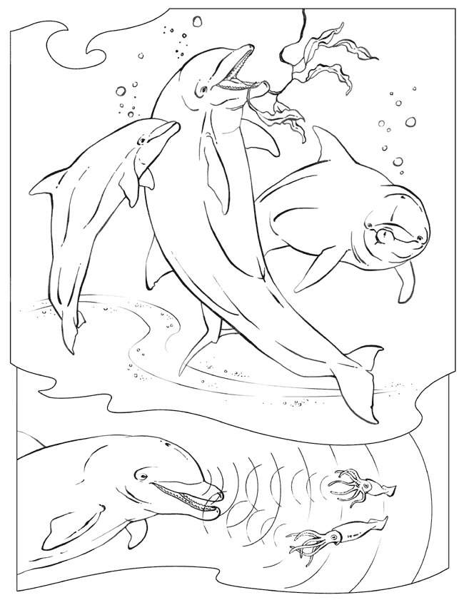 dolphin-coloring-page-0023-q1