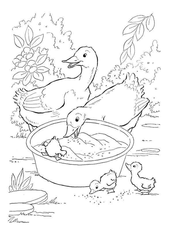 duck-coloring-page-0002-q2