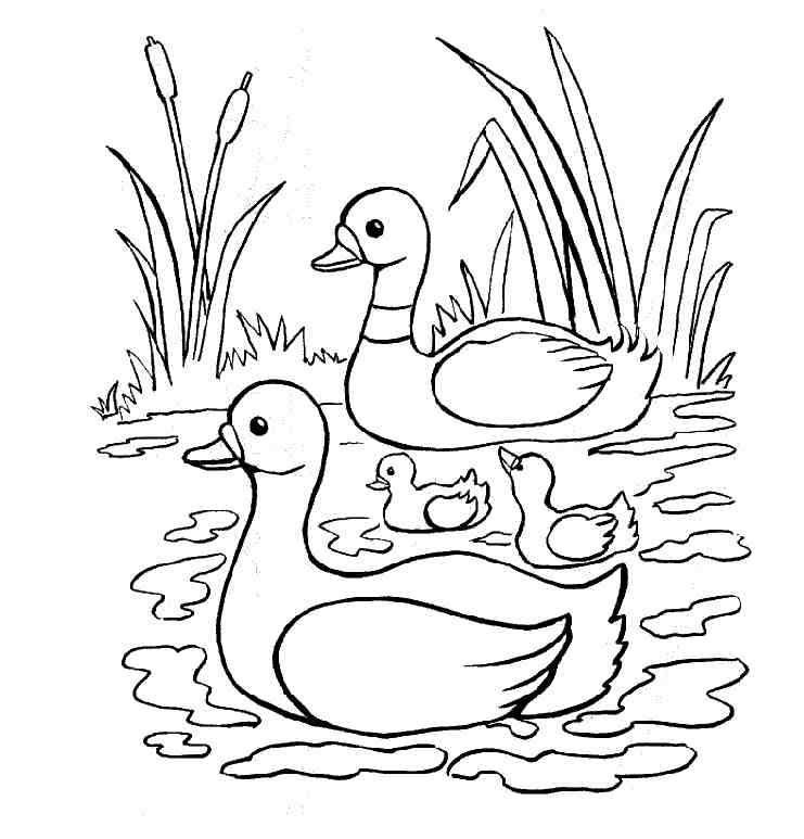 duck-coloring-page-0018-q1