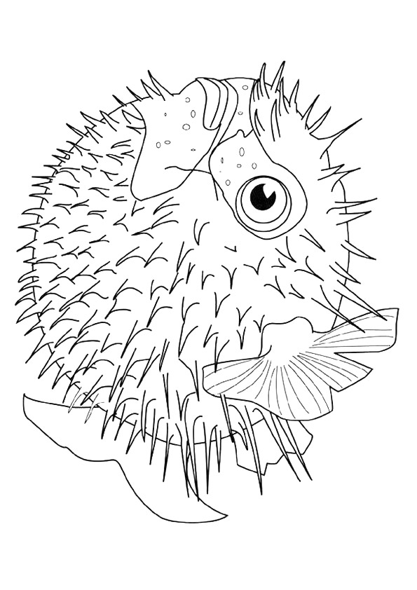 fish-coloring-page-0014-q2