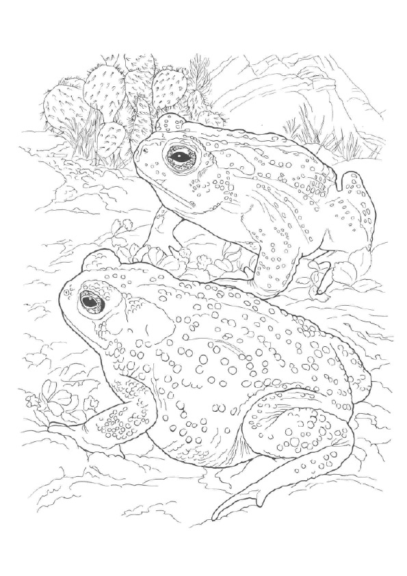 frog-coloring-page-0002-q2