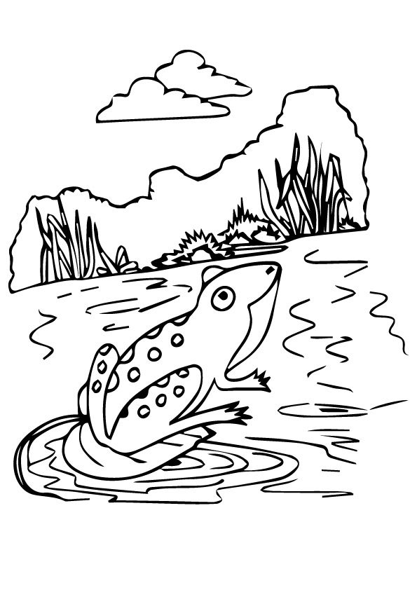 frog-coloring-page-0009-q2
