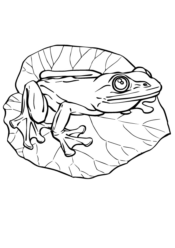 frog-coloring-page-0015-q2
