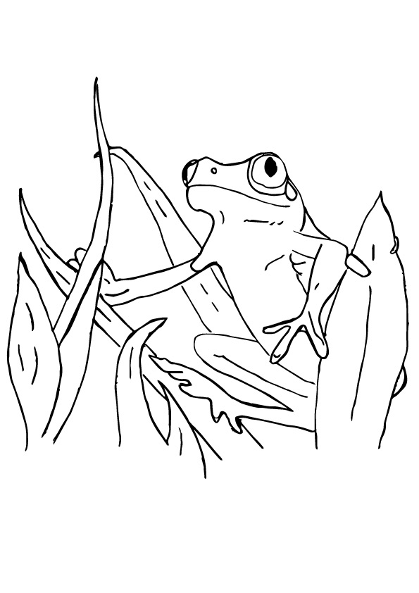 frog-coloring-page-0017-q2