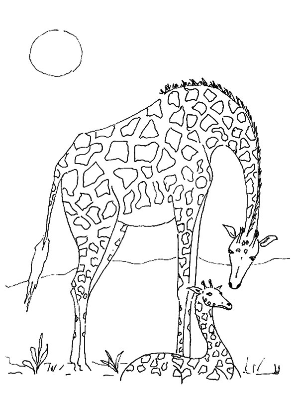 giraffe-coloring-page-0022-q2