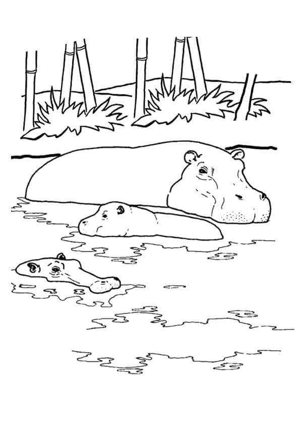hippo-coloring-page-0029-q2
