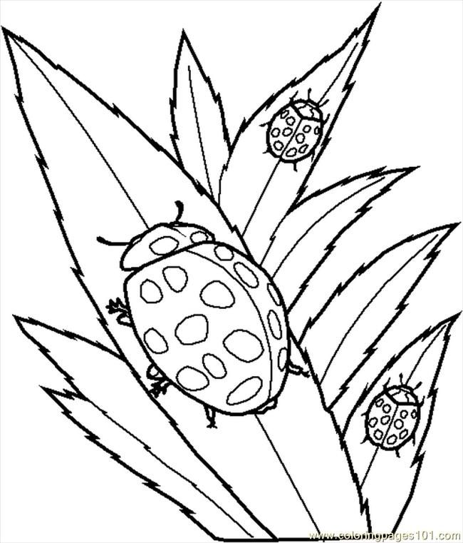 insect-coloring-page-0027-q1