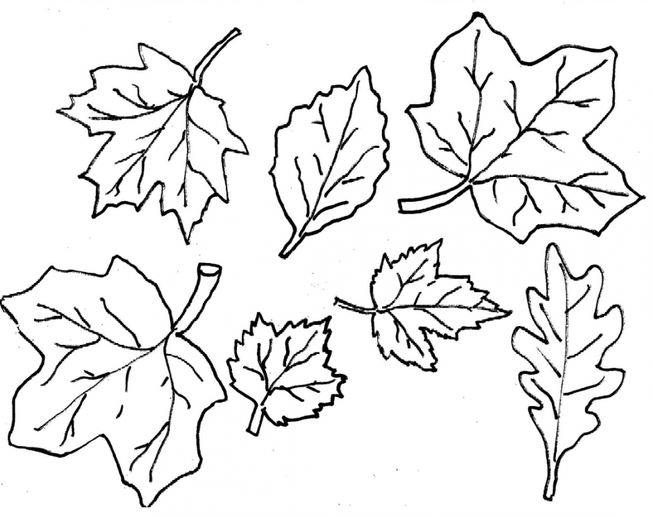leaf-coloring-page-0002-q1