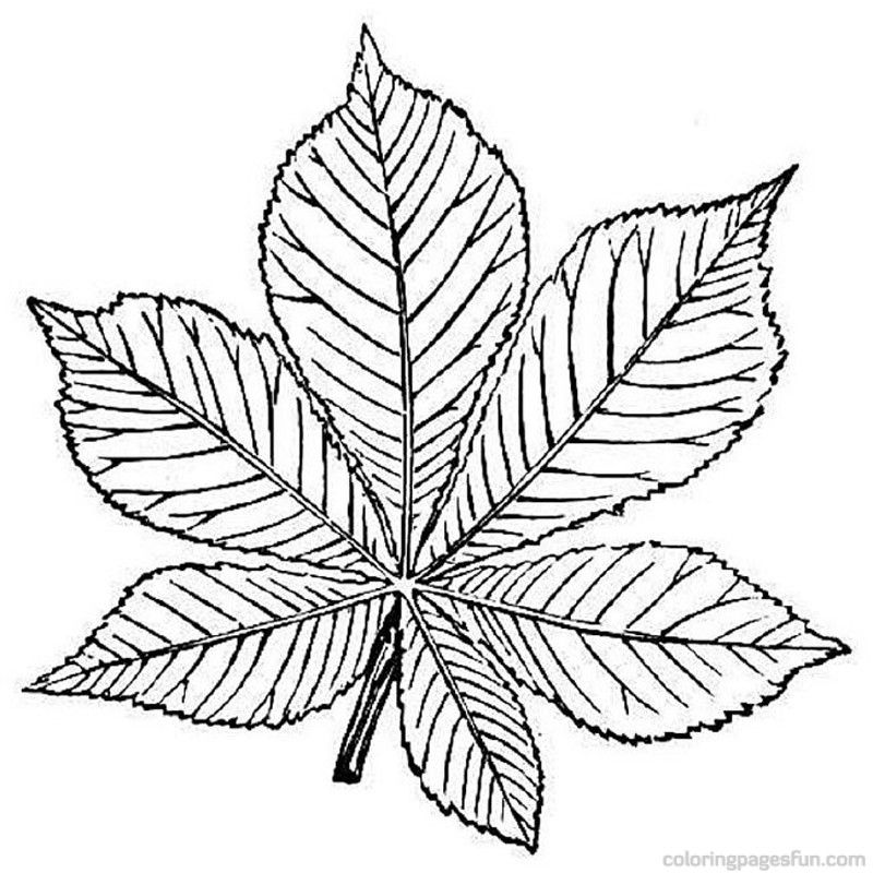 leaf-coloring-page-0006-q1
