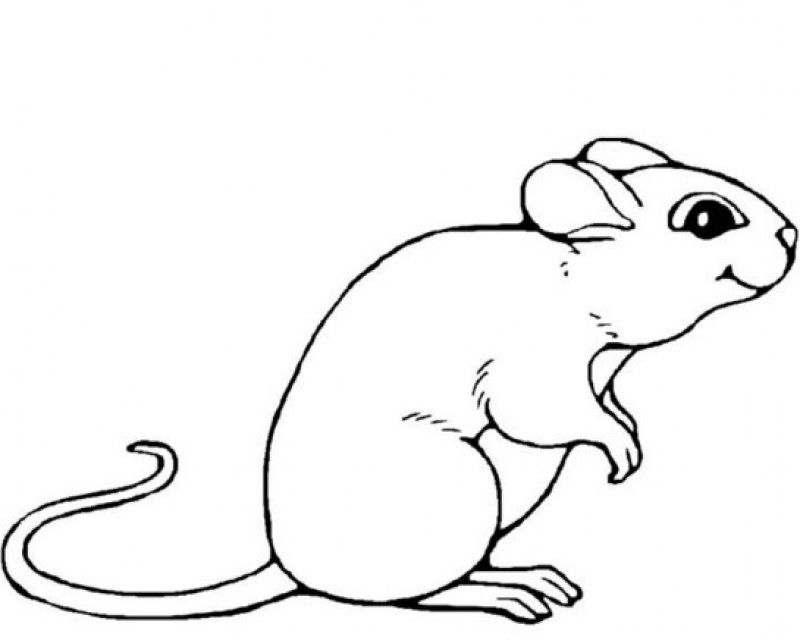 mouse-coloring-page-0012-q1