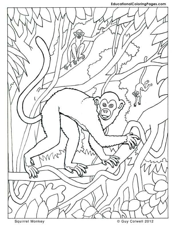 monkey-coloring-page-0004-q1