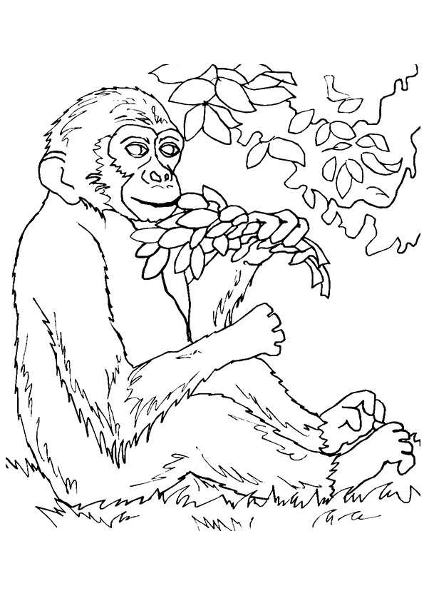 monkey-coloring-page-0007-q2
