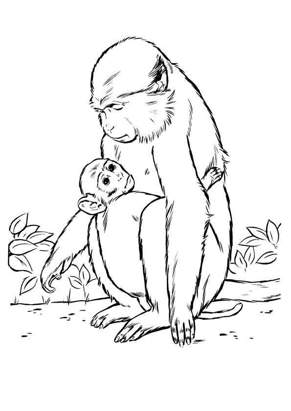 monkey-coloring-page-0012-q2