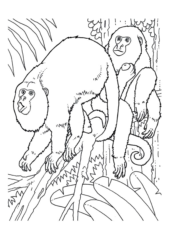 monkey-coloring-page-0014-q2