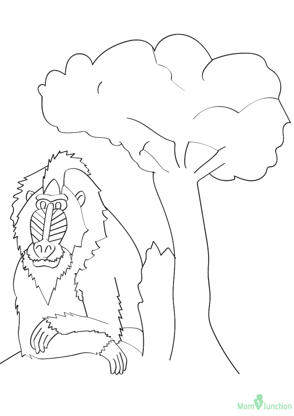 monkey-coloring-page-0019-q2