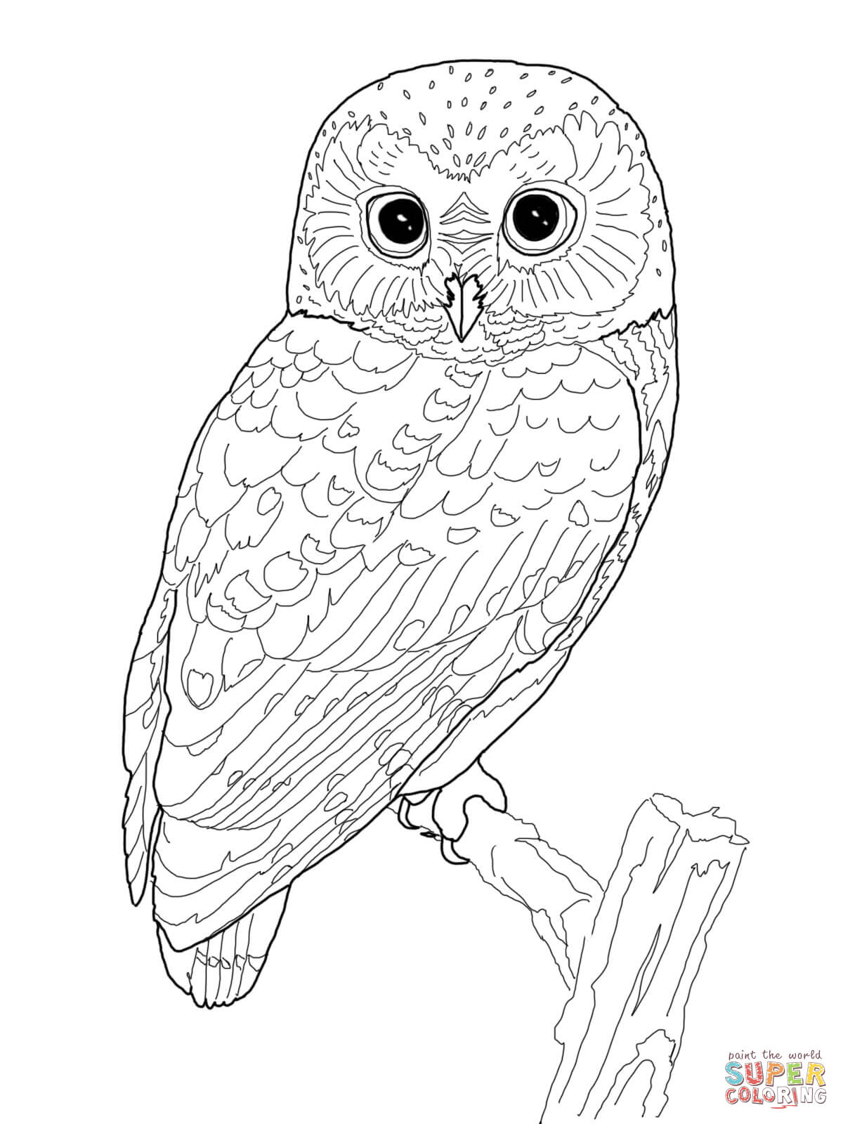 owl-coloring-page-0010-q1