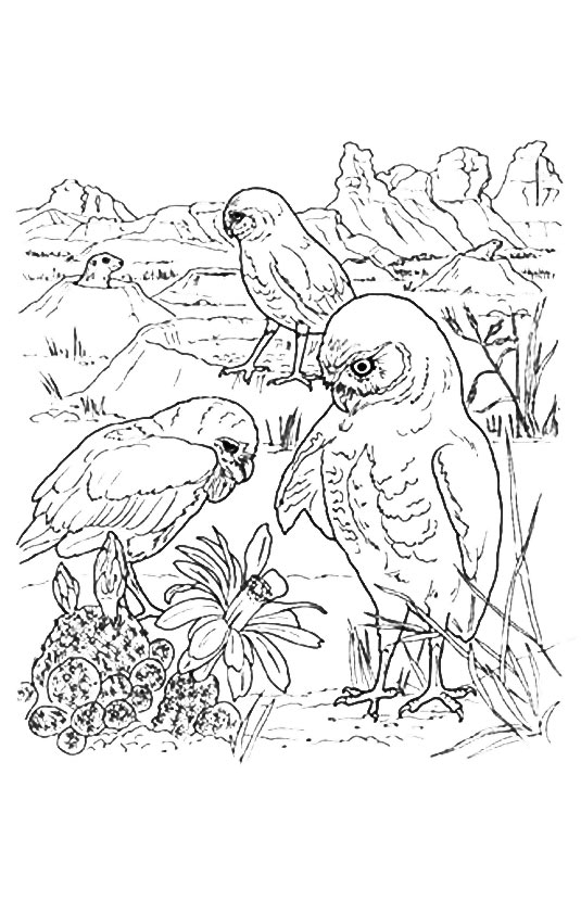 owl-coloring-page-0014-q2