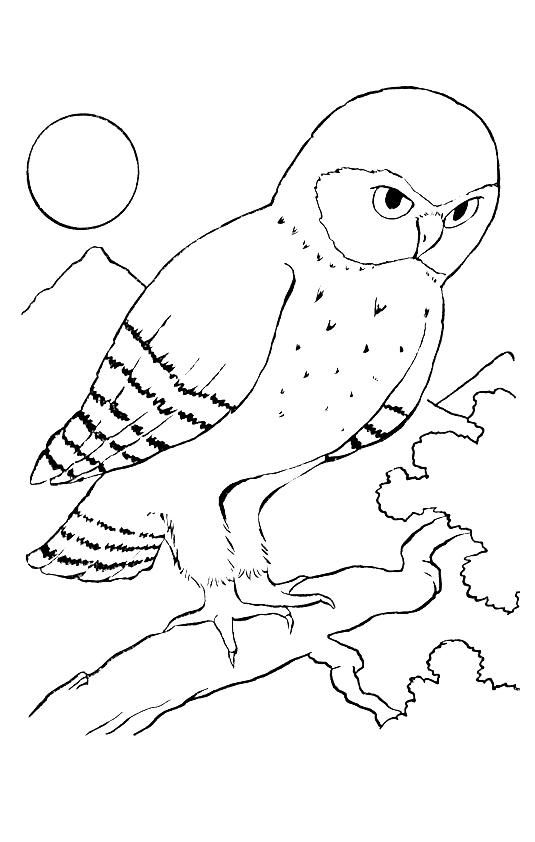 owl-coloring-page-0017-q2