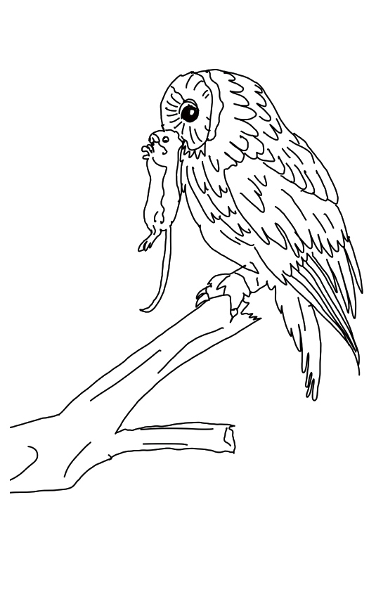 owl-coloring-page-0024-q2