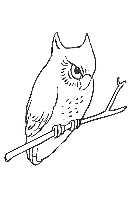 owl-coloring-page-0030-q2