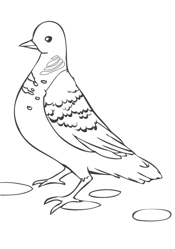 pigeon-dove-coloring-page-0017-q2
