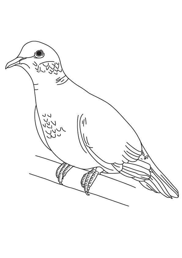 pigeon-dove-coloring-page-0018-q2