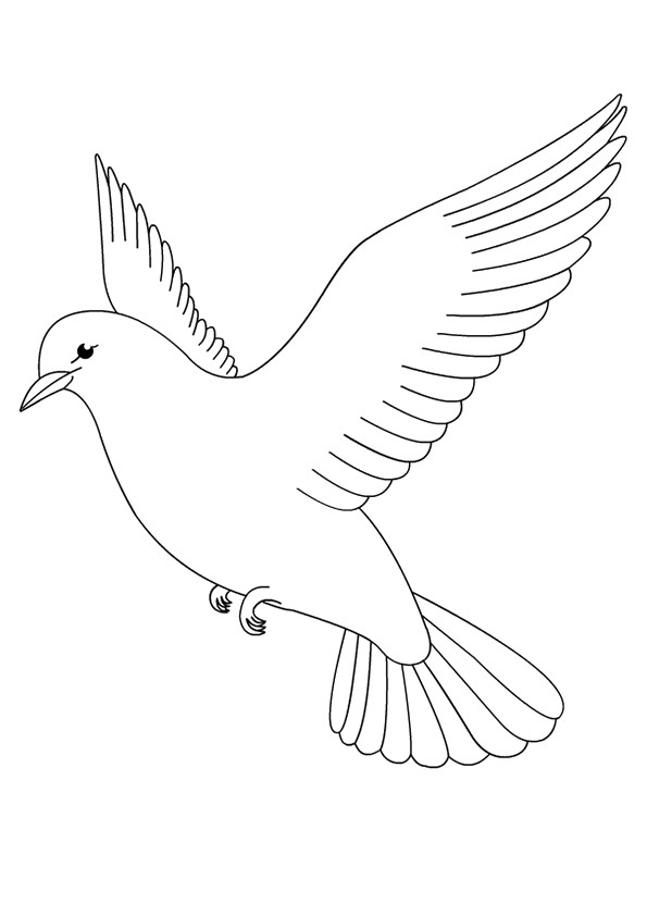 pigeon-dove-coloring-page-0024-q2