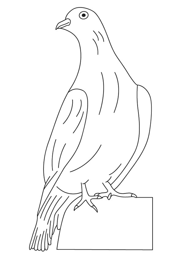pigeon-dove-coloring-page-0025-q2