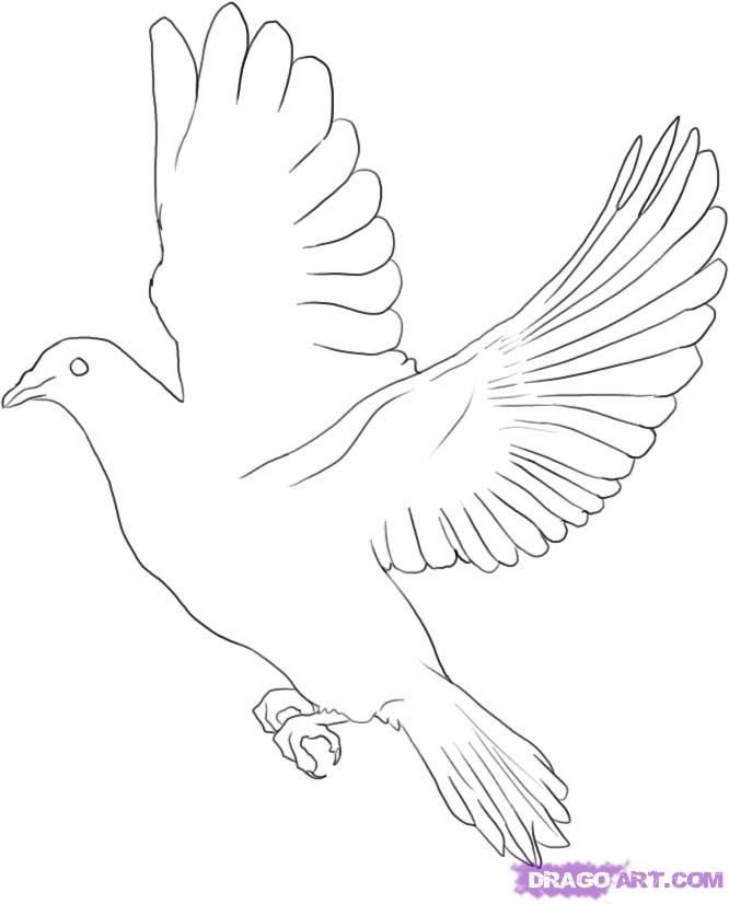 pigeon-dove-coloring-page-0028-q1