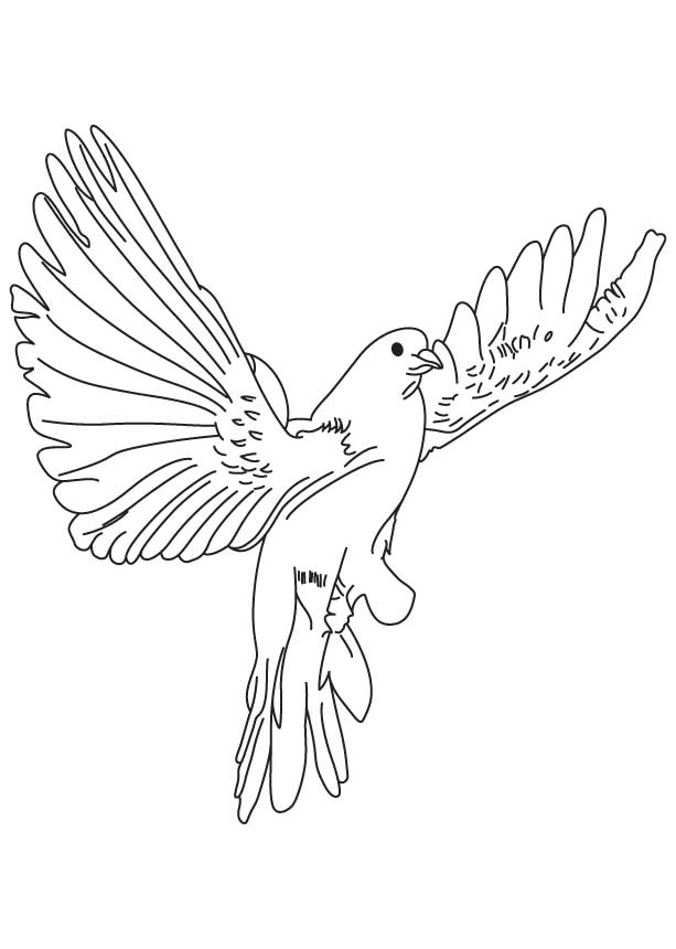 pigeon-dove-coloring-page-0029-q1