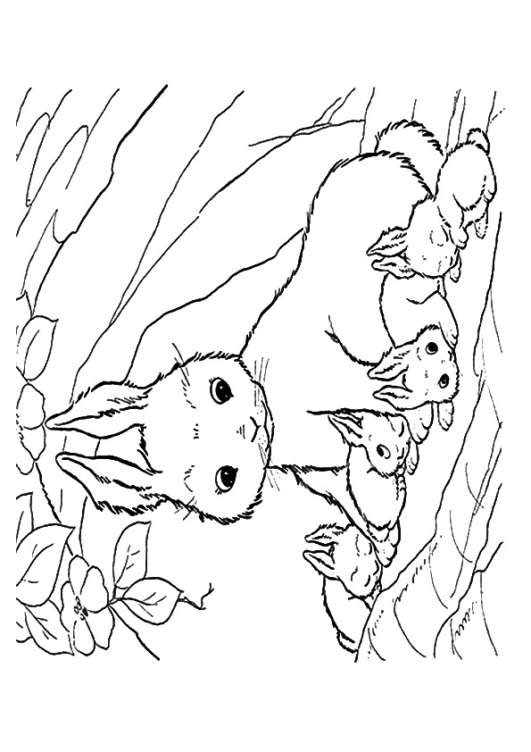 rabbit-coloring-page-0007-q2