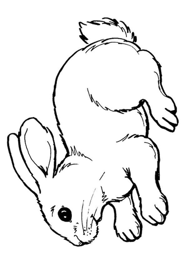 rabbit-coloring-page-0019-q2