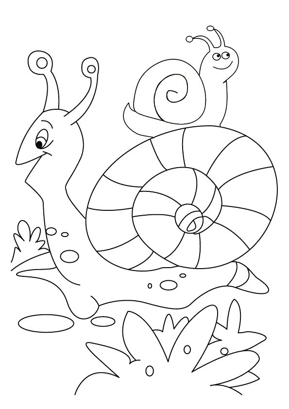 snail-coloring-page-0005-q2