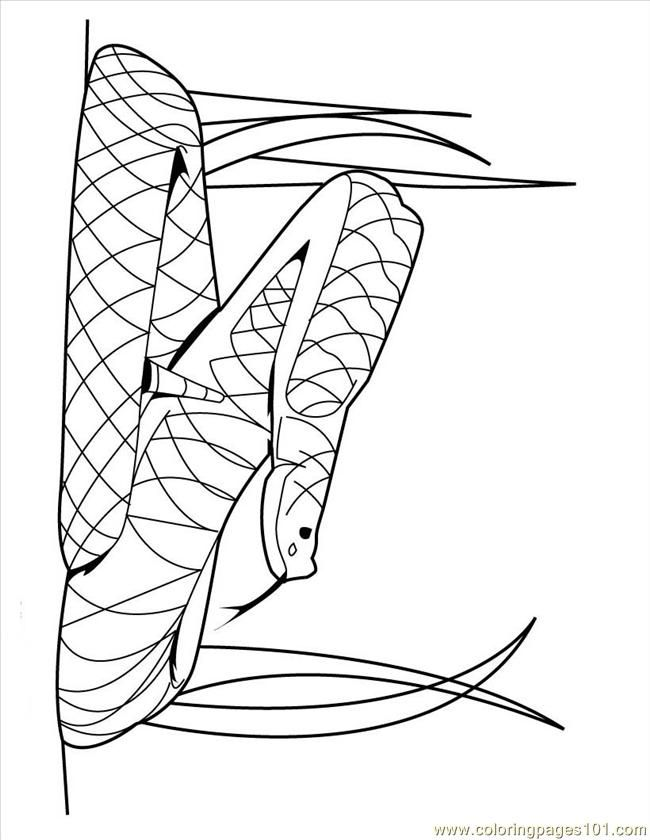 snake-coloring-page-0023-q1