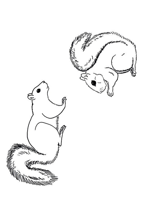 squirrel-coloring-page-0017-q2