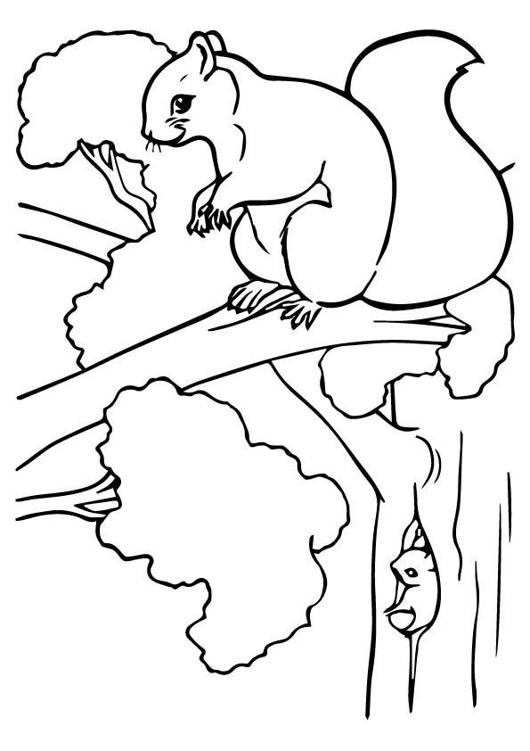 squirrel-coloring-page-0020-q2