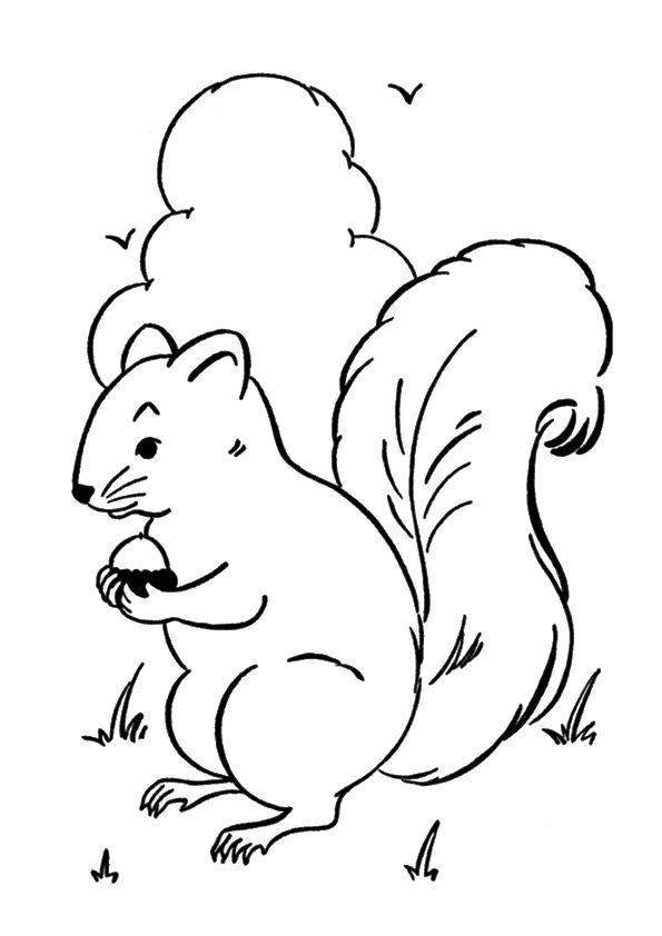 squirrel-coloring-page-0030-q2