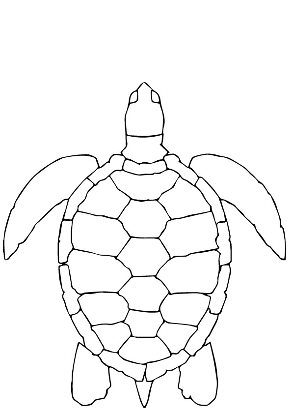 tortoise-and-turtle-coloring-page-0022-q2