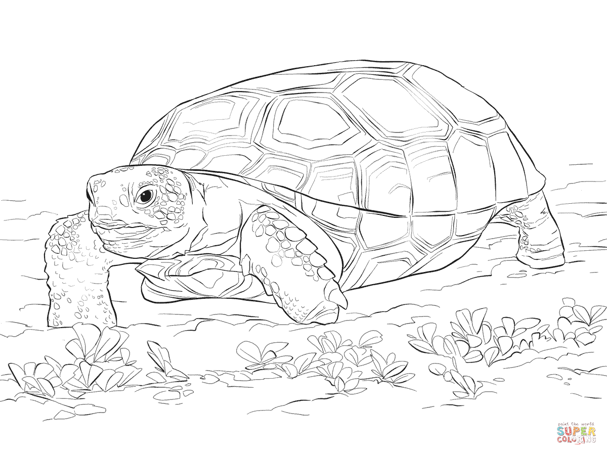 tortoise-and-turtle-coloring-page-0028-q1