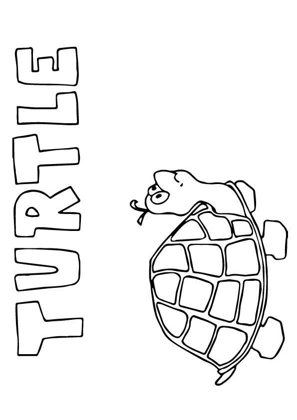 tortoise-and-turtle-coloring-page-0030-q2